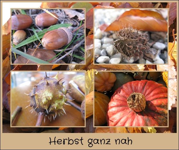 Herbst ganz nah…