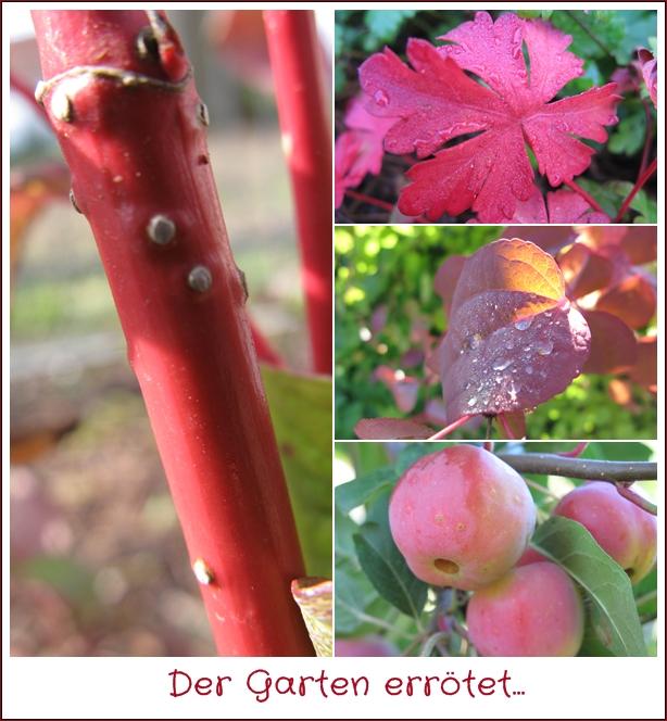 Der Garten errötet…