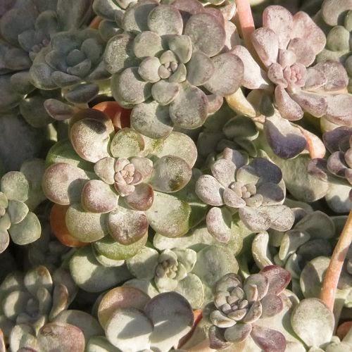 Januar-Farbpalette Grau … Luzia Pimpinella