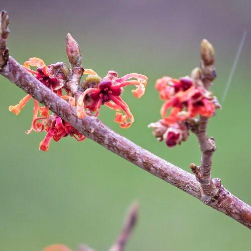 Ein Hauch von Frühling…