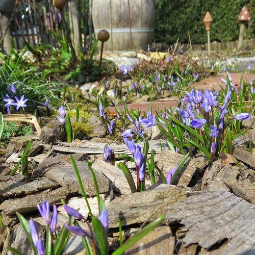 Arbeitseinsatz im alten Garten