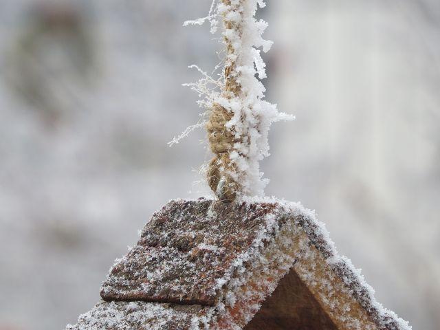 Frostig…