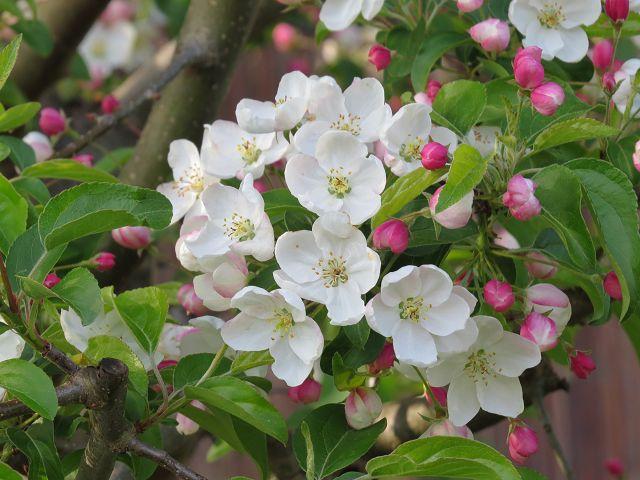 Frühling… mal wieder…