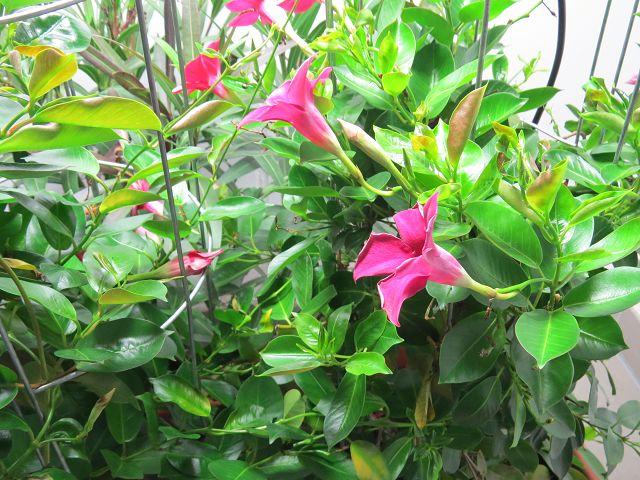 Sommer mitten im Winter? Dank Pflanzenleuchte!