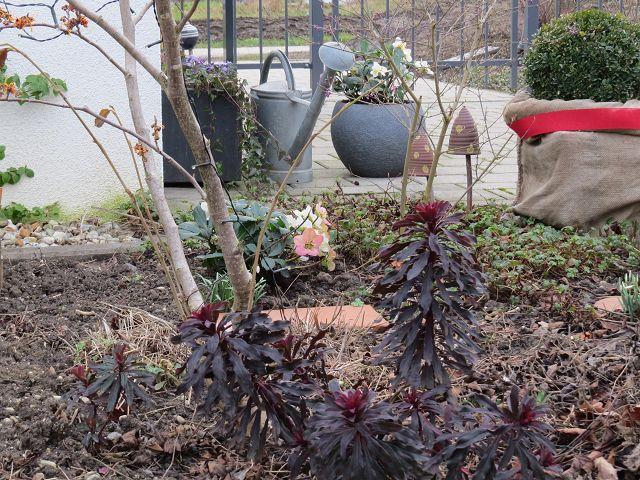 Ein Blick in meinen Februargarten und eine Gartengeräteempfehlung…