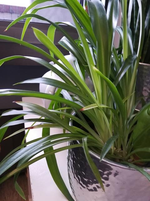 Luftreinigende pflanzen. 😍 30 Das Beste Von Luftreinigende ...
