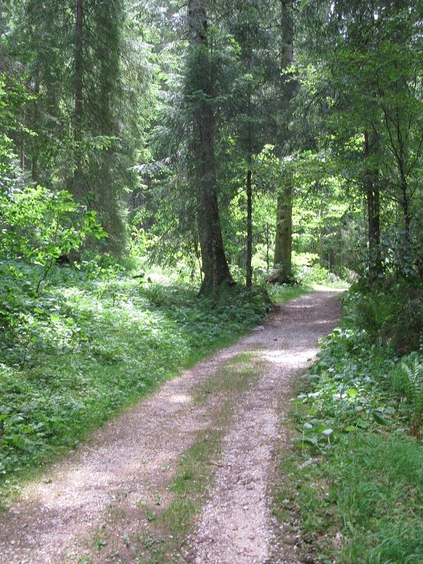 Carl-von-Linde-Weg